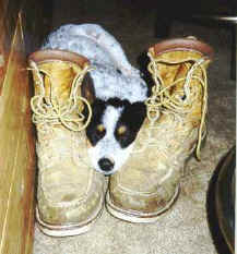dogboots.jpg (17882 bytes)